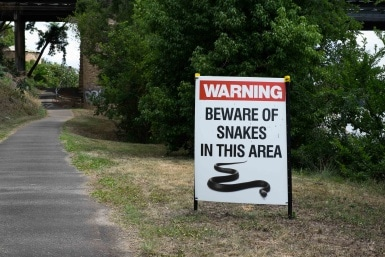 Beware of Snakes