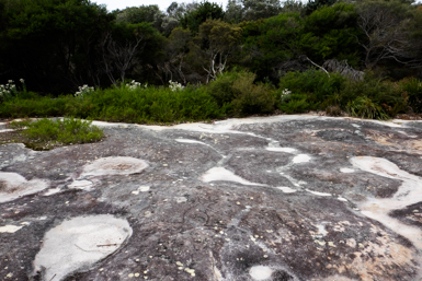 Aboriginal Carvings near Bundeena