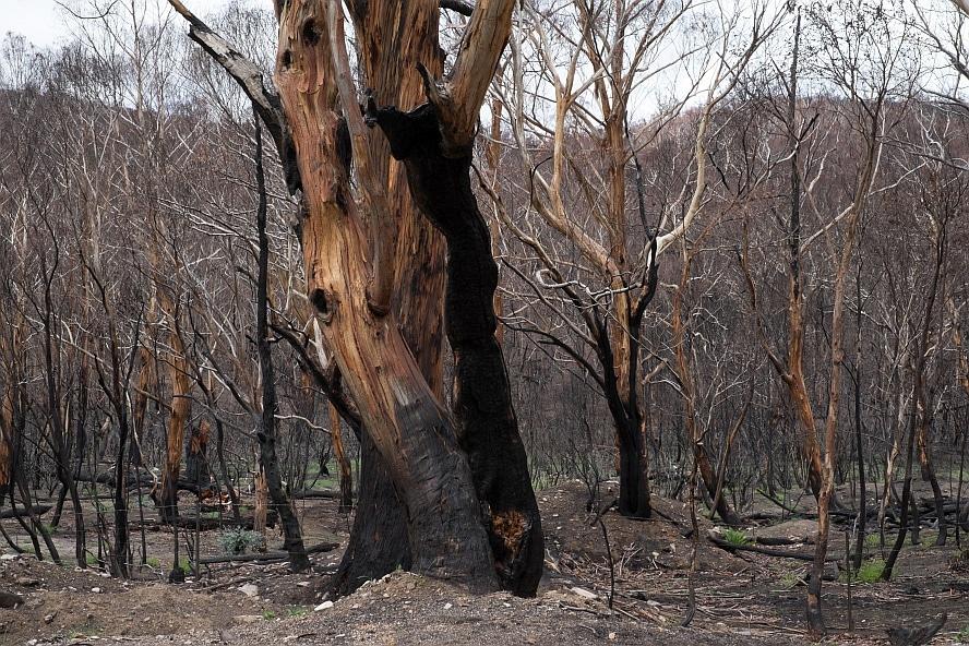 Cobargo bushfires