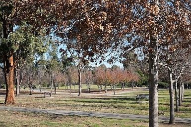 Marsden Park or Park Central Campbelltown