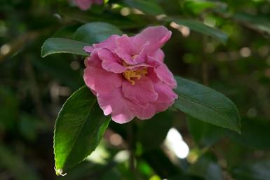 Camellia Gardens Caringbah