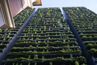 Vertical Garden Chippendale
