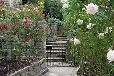 Prize winning Rose Garden in Cremorne
