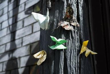 Origami in Caroline Lane