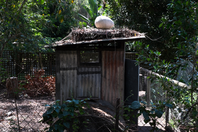 Egg Sculpture on Chook Run
