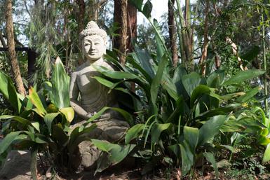Dangar Island Garden