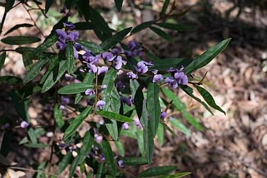Stoney Range Regional Botanic Garden