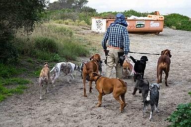Commercial Dog Walker Brighton