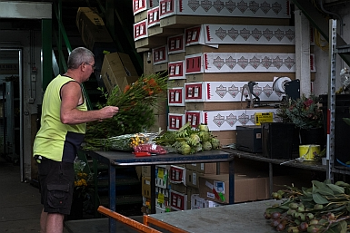 East Coast Wildflowers Warehouse