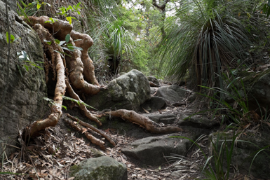 Terrys Creek Walk