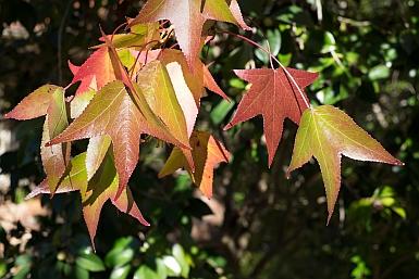 Autumn Colours near Lisgar Gardens