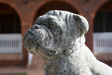 Concrete Bulldog