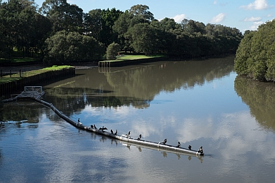 Boat Harbour Boom Cooks River