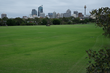 City Views from Moore Park