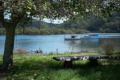 Looking through the trees to Patonga Creek