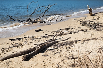 Debris on Patonga Beach
