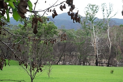 Green after the bushfire