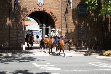NSW Mounted Police