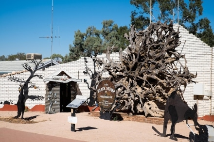 Paringa Black Stump
