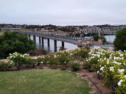 Murray Bridge and Rail Bridge in Murray Bridge