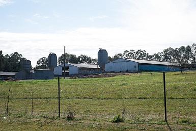 Layer Farm