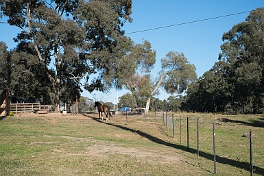 Rural Scene in Rouse Hill