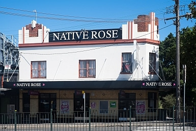 The Native Rose