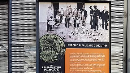 Bubonic Plague in Sydney
