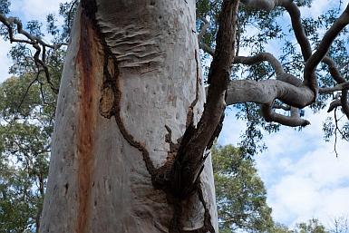 Termite Tracks Balls Head Reserve