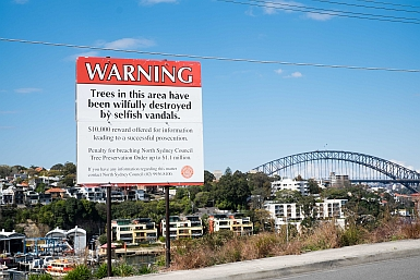 Tree Poisoning North Sydney